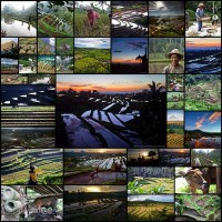 Bali_rice_terraces41