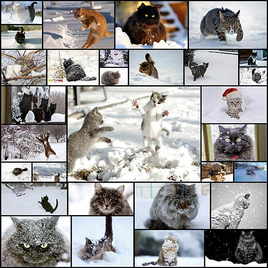 cats_have_snow_days_too_32_pics