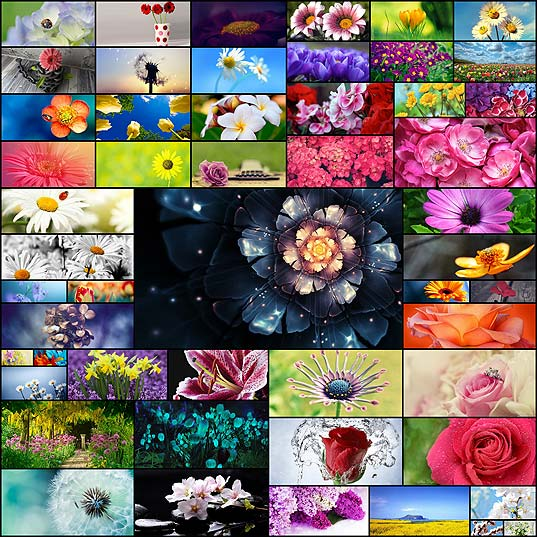 free-flower-wallpapers50