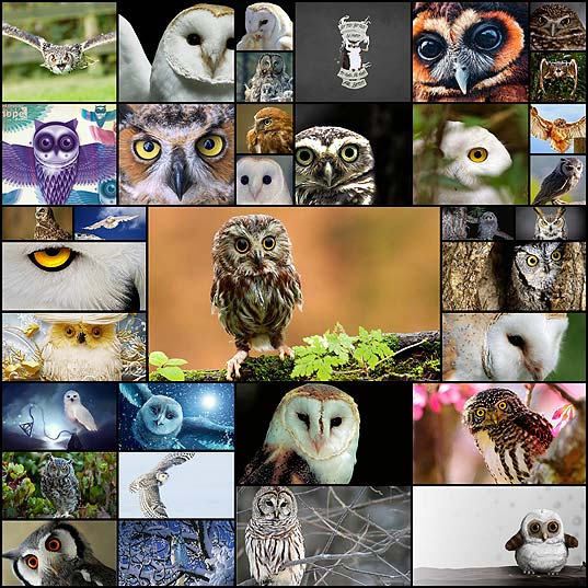 free-owl-wallpapers35