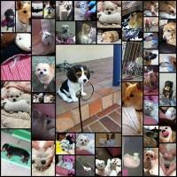 so_cute_dogs46