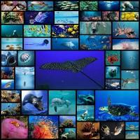 amazing-underwater-wallpapers50