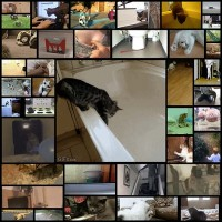 cat_gifs40