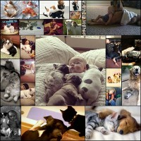 life-with-animals20