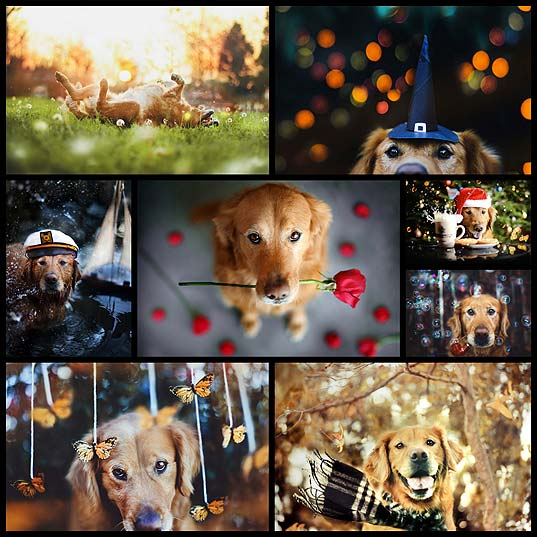 amazing-dogs-photos-by-jessica-trinh8