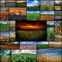 awesome-cornfield-pictures30