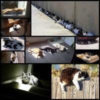cat_sunshine10