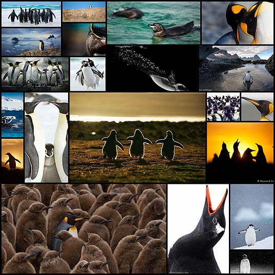 extraordinary-penguins-photography21