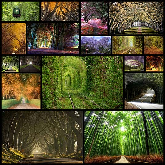 magnificent-tree-tunnels-18
