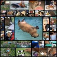 pochemu-stoit-zavesti-kapibaru32