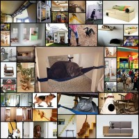 products-and-designs-for-cats-and-dogs37