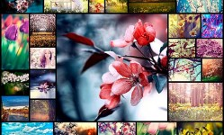 spring-photography40
