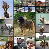 animal_riders25