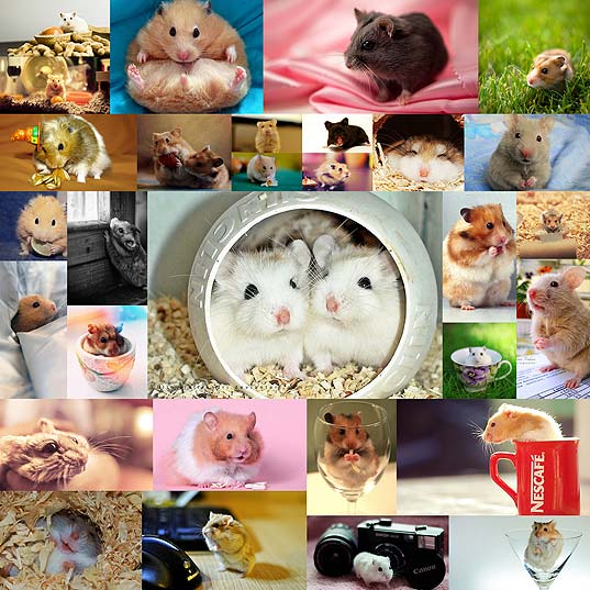 cute-and-adorable-hamster-photography-collection30