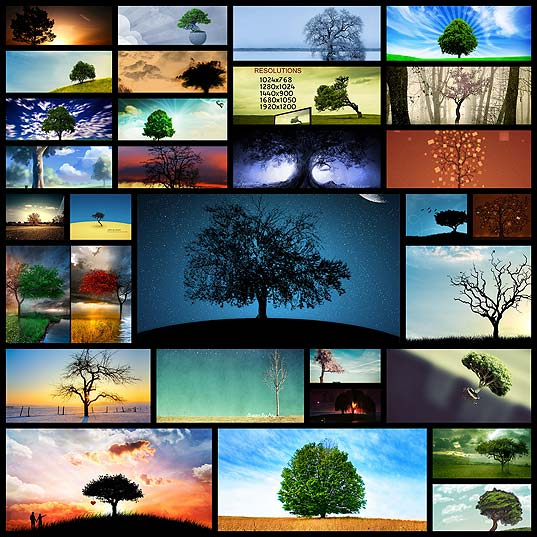 lovely-tree-wallpapers-free30