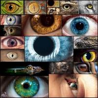 mesmerizing-eyes-photography20