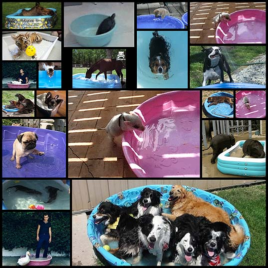 16-animals-learning-to-love-the-kiddie-pool