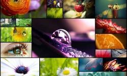 25-of-beautiful-macro-nature-wallpapers