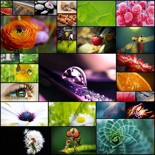 25-of-beautiful-macro-nature-wallpapers