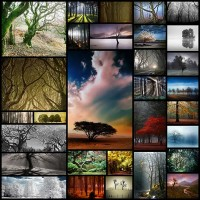 30-magical-examples-of-tree-photography-for-your-inspiration