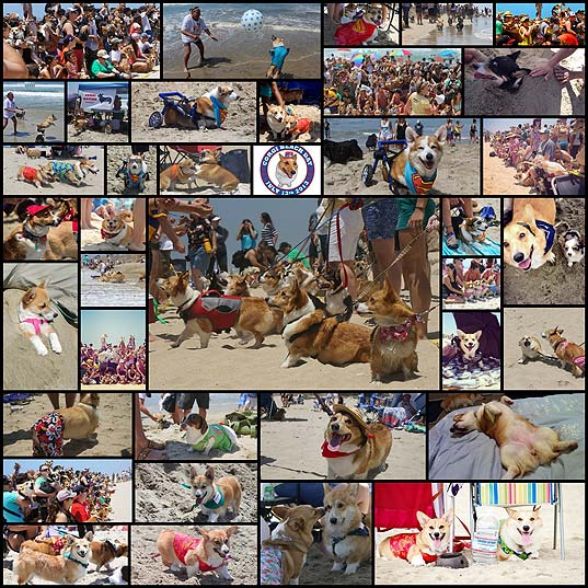 318-corgis-come-together-on-one-california-beach38
