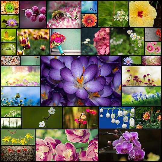 colorful-flower-background-images-for-your-mac-desktop35