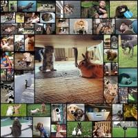 funny_animals50