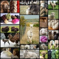 heres-to-the-amazing-animals-who-give-us-yarn25