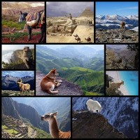 10-animals-with-the-most-beautiful-views