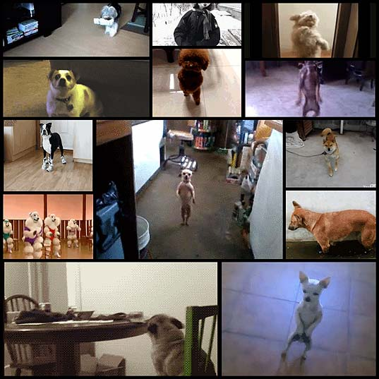 13-dogs-you-might-see-on-the-dancefloor-6cmo