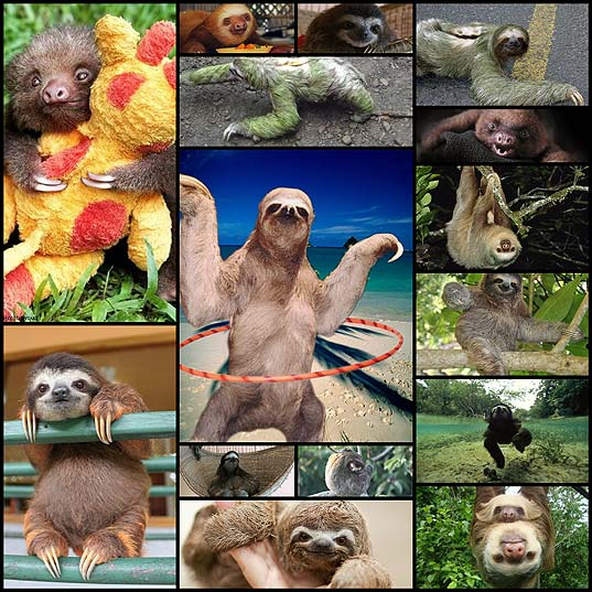 15-sloth-facts-from-sloths