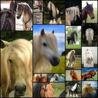 20-horses-with-better-hair-than-you