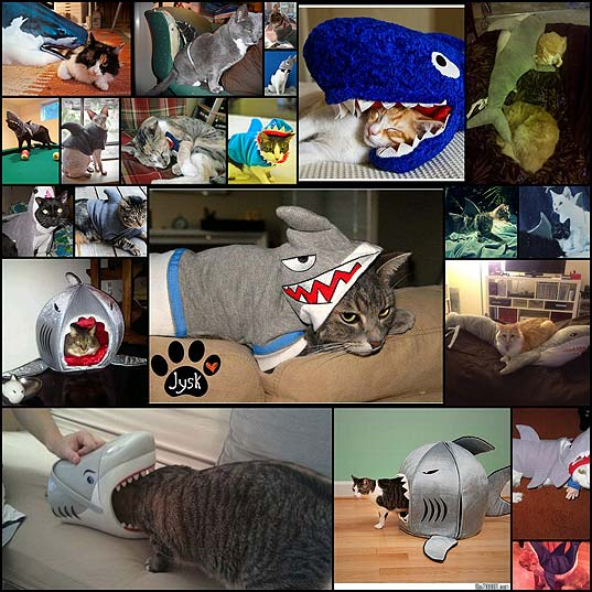 24-cats-who-are-celebrating-shark-week-9ibk