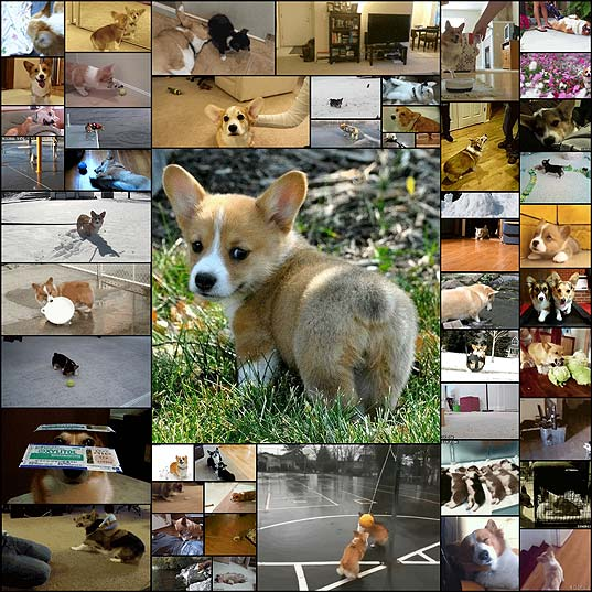 51-corgi-gifs-that-have-changed-the-world