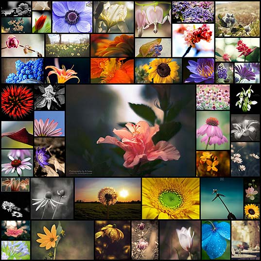 55-beautiful-flower-pictures-for-your-inspiration