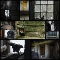 abandoned-house-overtaken-by-animals-kai-fagerstrom13