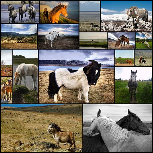 breathtaking-photos-of-wild-horses-around-the-globe18