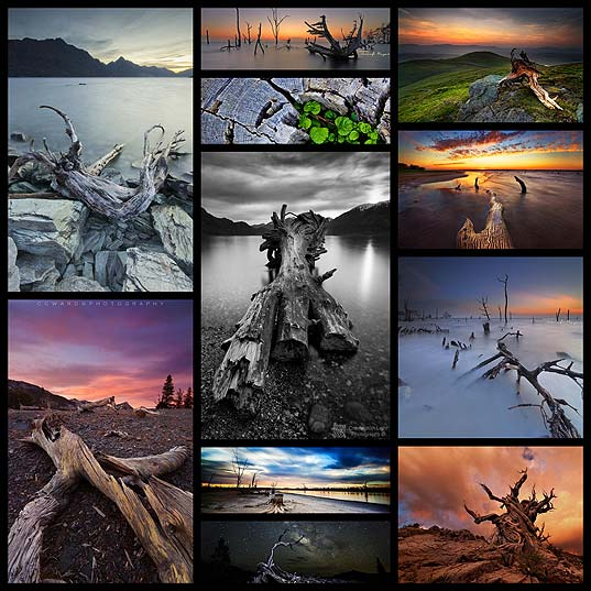 dead-beauty-stunning-shots-of-dead-trees11