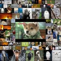 ikemen_animal100