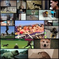 the_best_dog_gifs_on_the_internet_22_gifs