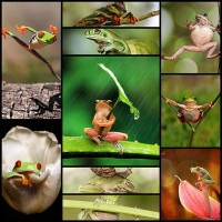 10-cool-photos-of-expressive-frog