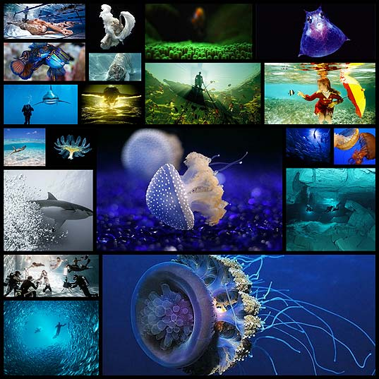20-beautiful-examples-of-underwater-photography