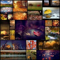 a-detailed-guide-to-photographing-fall-foliage24