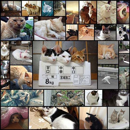 cats30