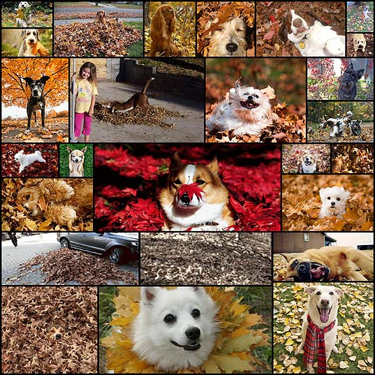 dogs-freaking-out-about-autumn-leaves