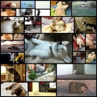floppy-animals-to-get-you-through-the-week26