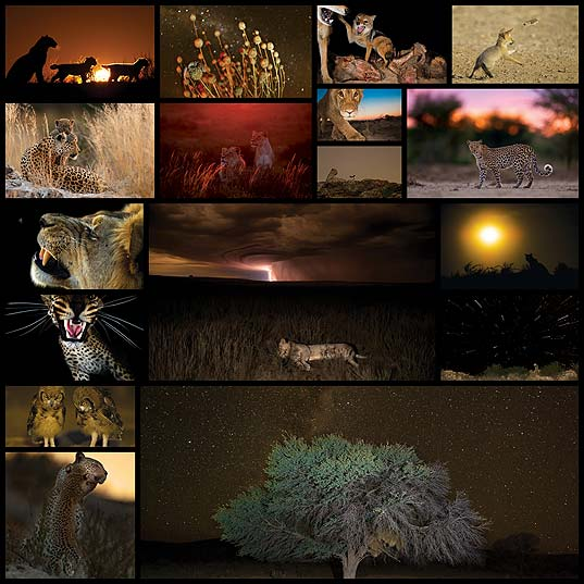 kalahari-desert17
