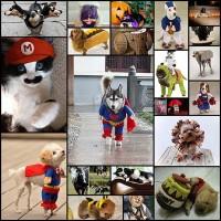 20-cutest-pet-halloween-costumes-ideas