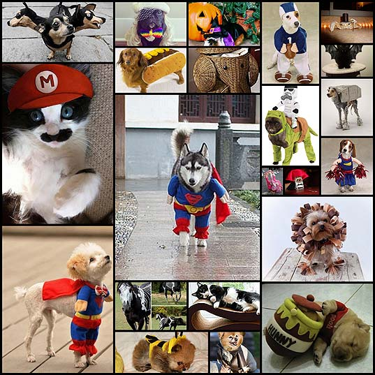 20-cutest-pet-halloween-costumes-ideas