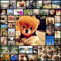 40-cutest-pictures-of-boo-and-buddy-fmhg